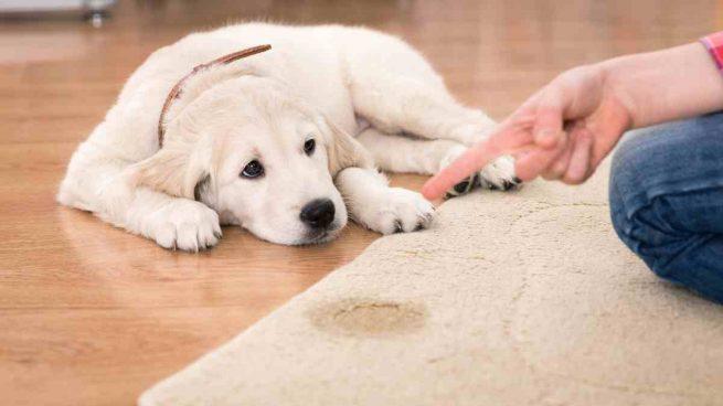 Hacer que tu perro orine donde debe