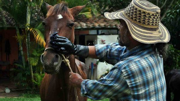 Champú caballos