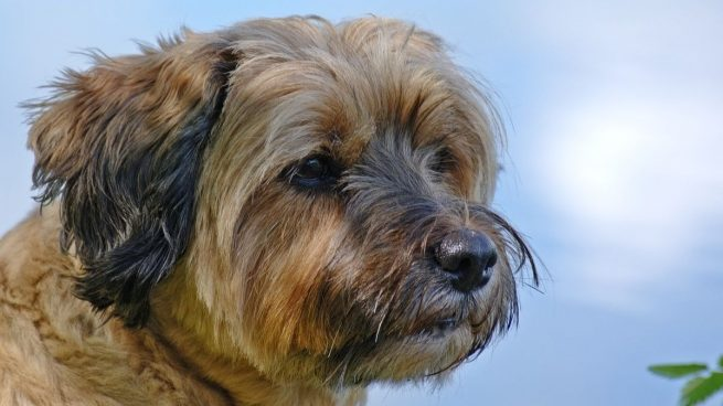 Las 5 actividades más peligrosas para tu perro en verano: cómo evitarlas