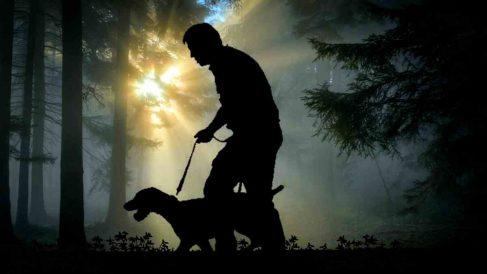 Adiestramiento perros para cazar