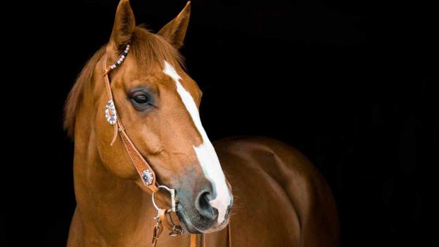 ¿Tu caballo piensa?