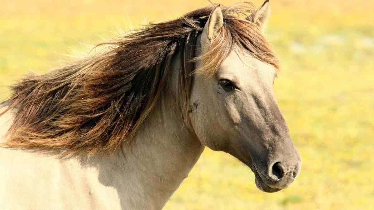 Capacidad de pensar en el caballo