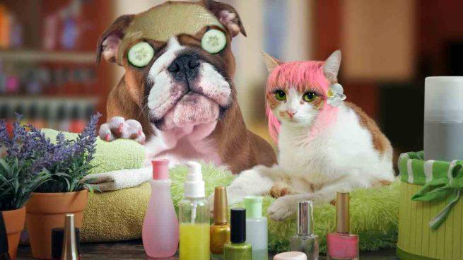 Maquillaje de mascotas