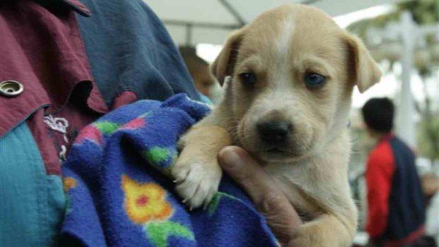 Contrato de adopción de mascota