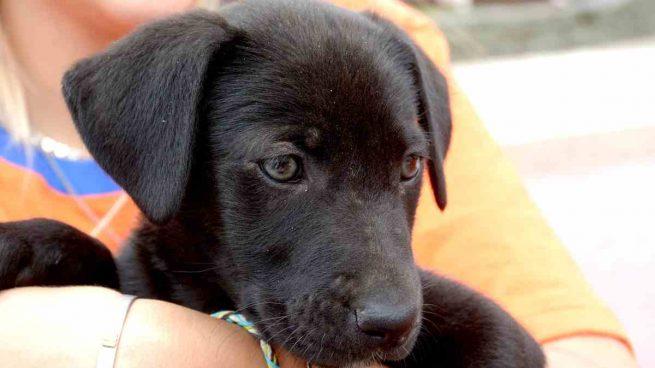 Contrato para adoptar una mascota