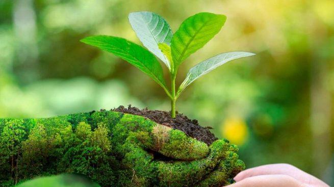 Reciclar papel con energías renovables: la nueva fórmula para frenar el cambio climático