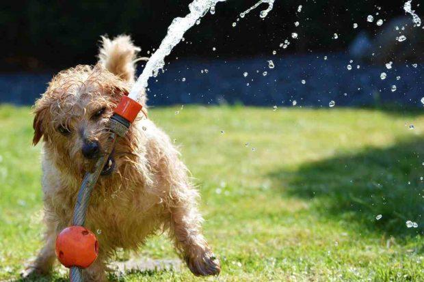 Actividades perros en verano