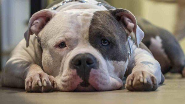 Problemas salud en perros