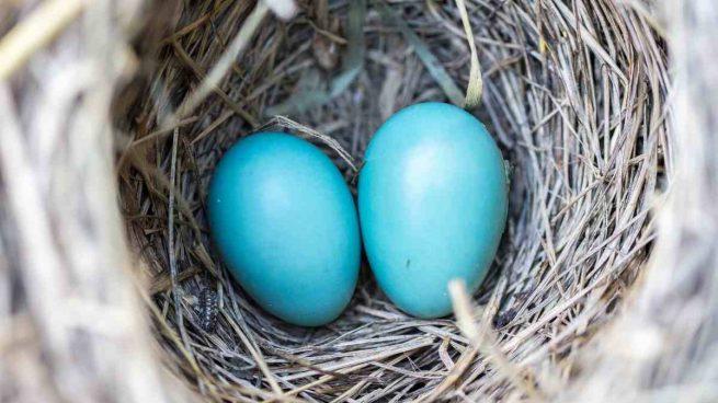 Fabricación nidos