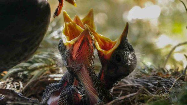 Aves hacen nidos