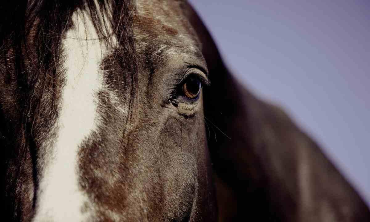 Razones tristeza caballo