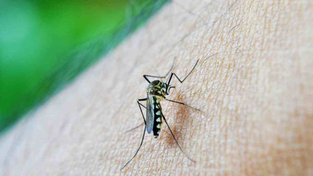 Insectos transmiten enfermedades