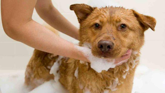 Perro se baña