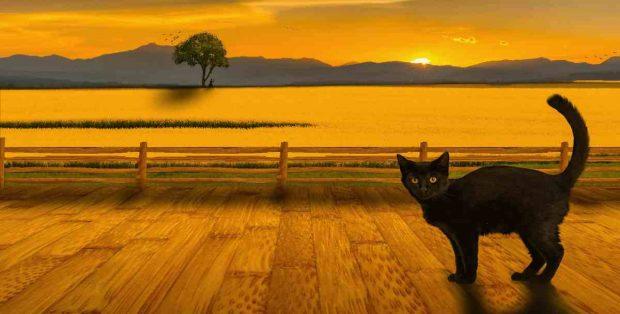 Efectos sol en gatos