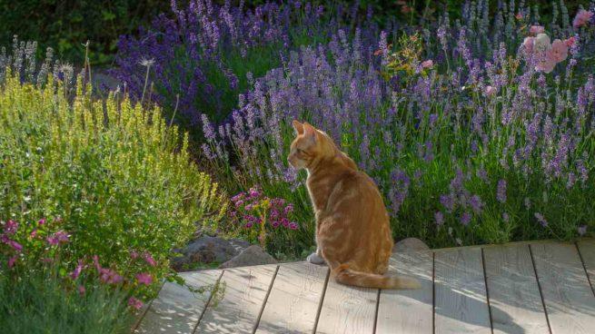 El verano y tu gato