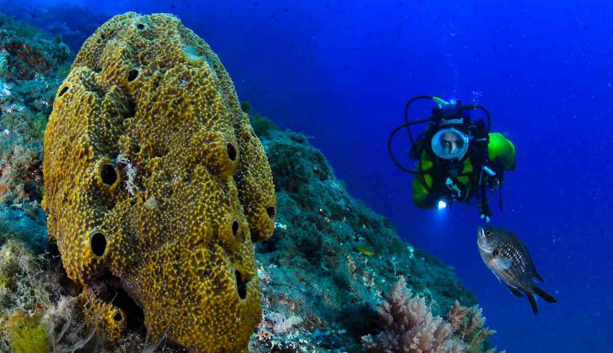¿Cómo son las esponjas marinas?
