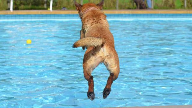 Perro en piscina