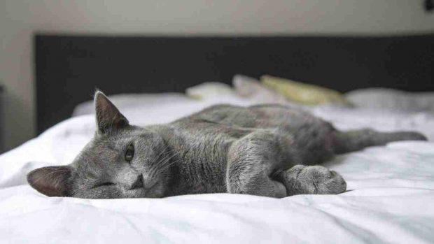 Gato se queda solo en casa