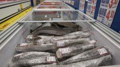 Expositor de pescado congelado
