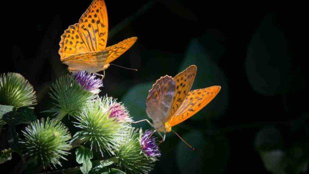 Mariposas ecosistemas