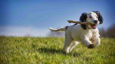 Cosas a saber sobre tu mascota hiperactiva