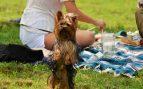 Picnic con tu perro