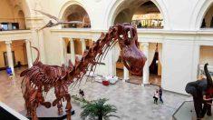 Grandes animales de la antigüedad