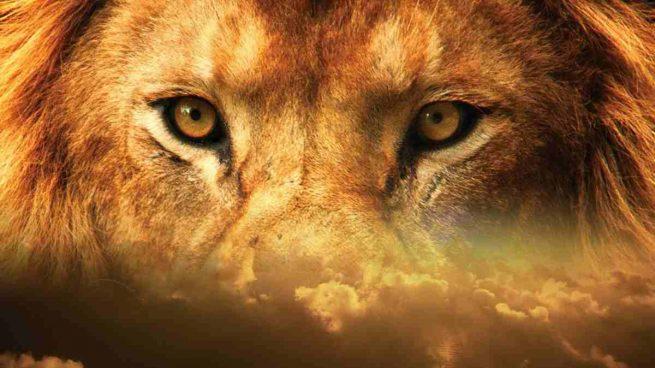 El origen del león
