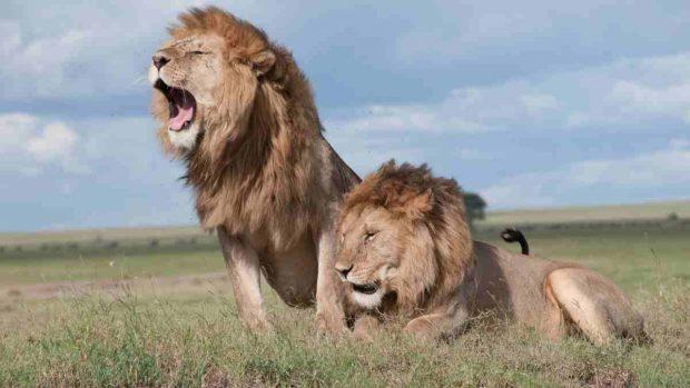 El león en la antigüedad