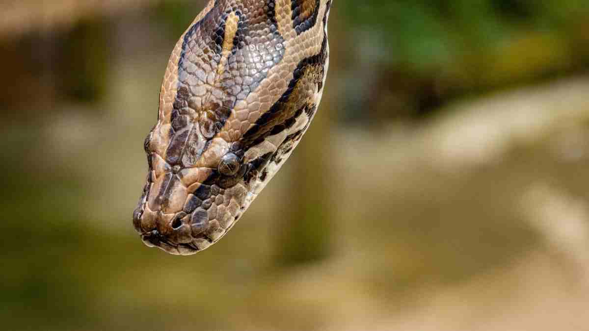 Serpientes más peligrosas por su veneno