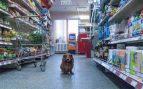 Perro en centro comercial