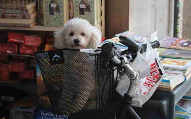 Qué centros comerciales admiten perros