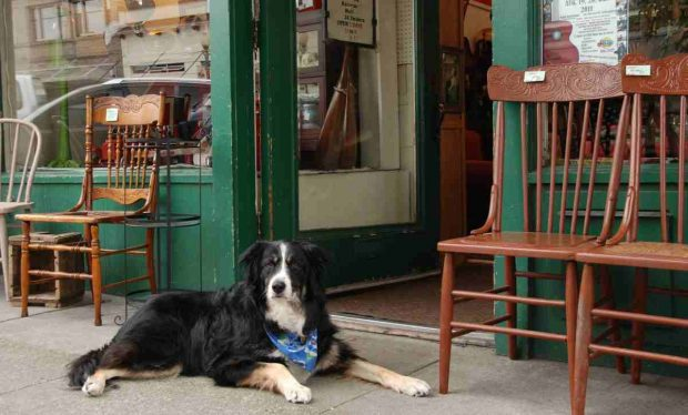 Perros en tiendas