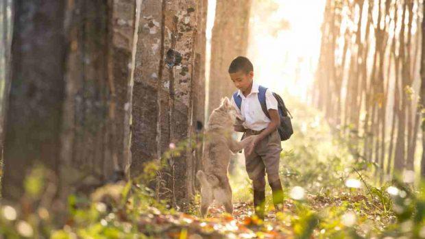 Niño teme perro