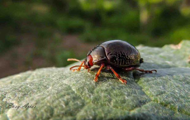 Un escarabajo como mascota
