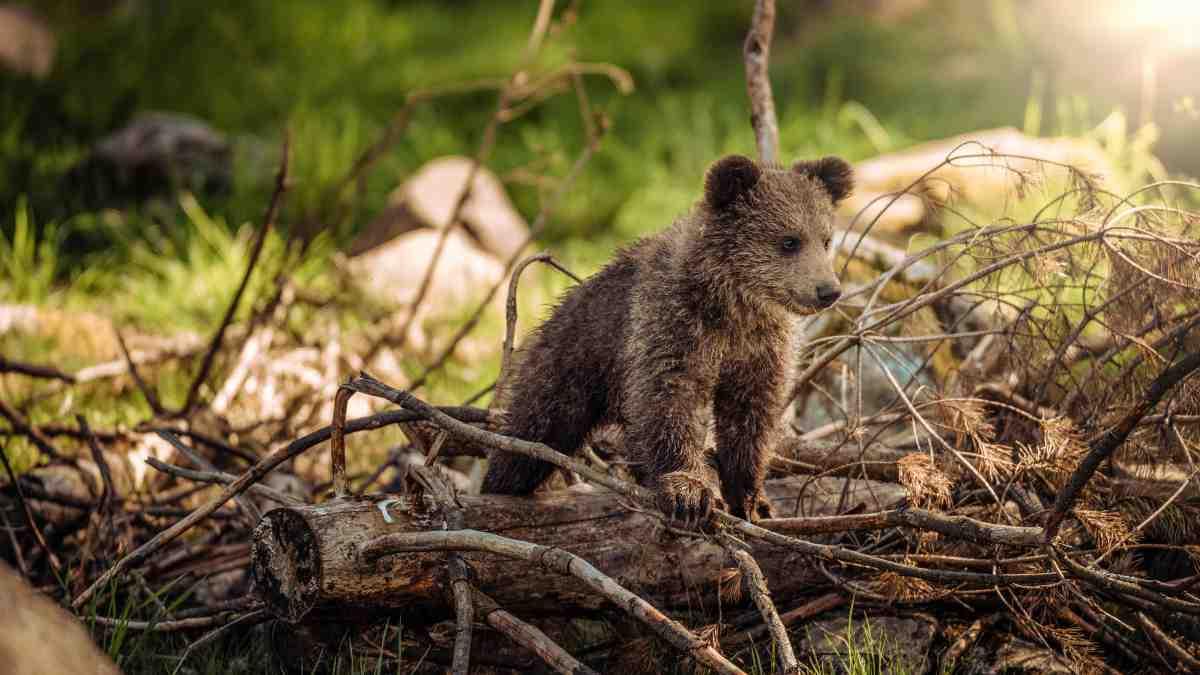 Curiosidades: los mamíferos placentarios