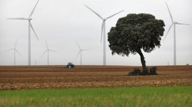 Iberdrola, comprometida con los ecosistemas sanos: más de 1.400 acciones de protección de la biodiversidad en dos años