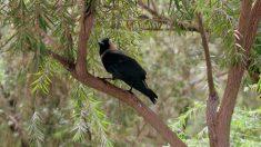 Pájaros muy curiosos