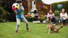 Todas las precauciones para jugar al aire libre de forma segura