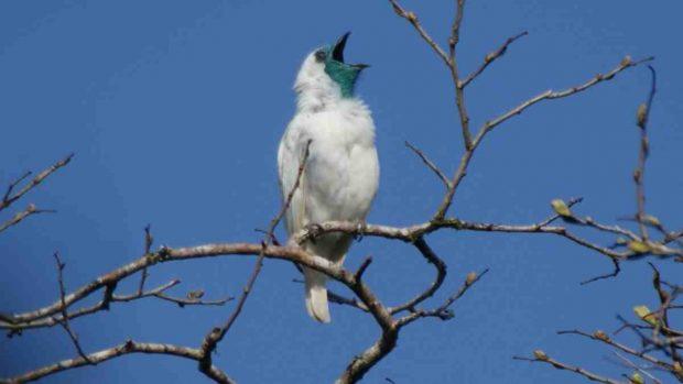 Pájaros ruidosos