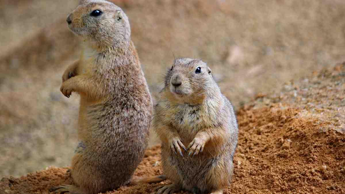 Prevenir y tratar tumores en roedores