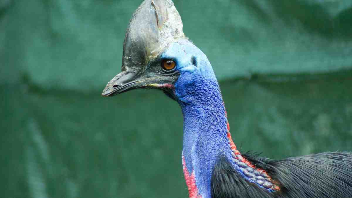 Aves curiosas y extrañas