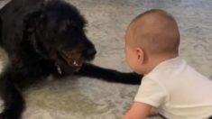 Facebook: La risa contagiosa de un bebé jugando con su perro se vuelve viral