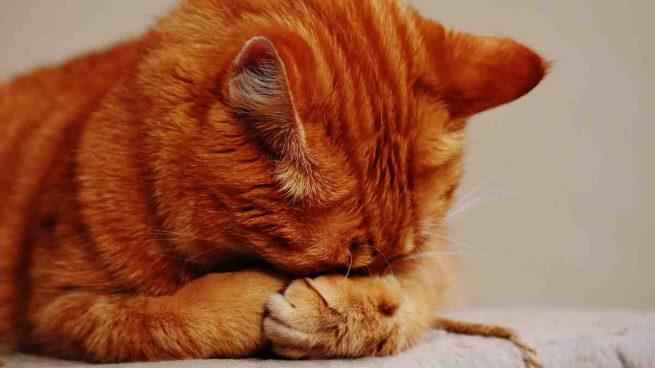 Articulaciones gatos