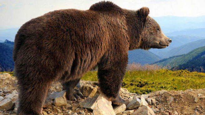 5 animales en peligro de extinción en España que podrían desaparecer en 2020