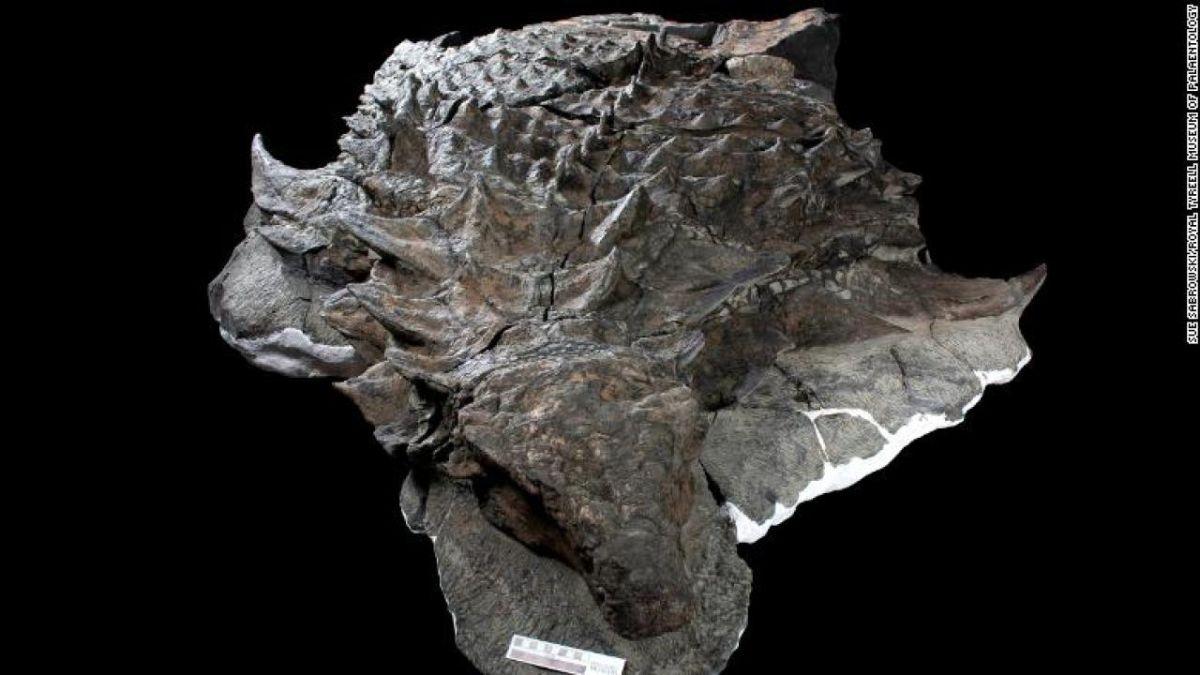 Científicos descubren lo que comió un dinosaurio blindado en su última comida