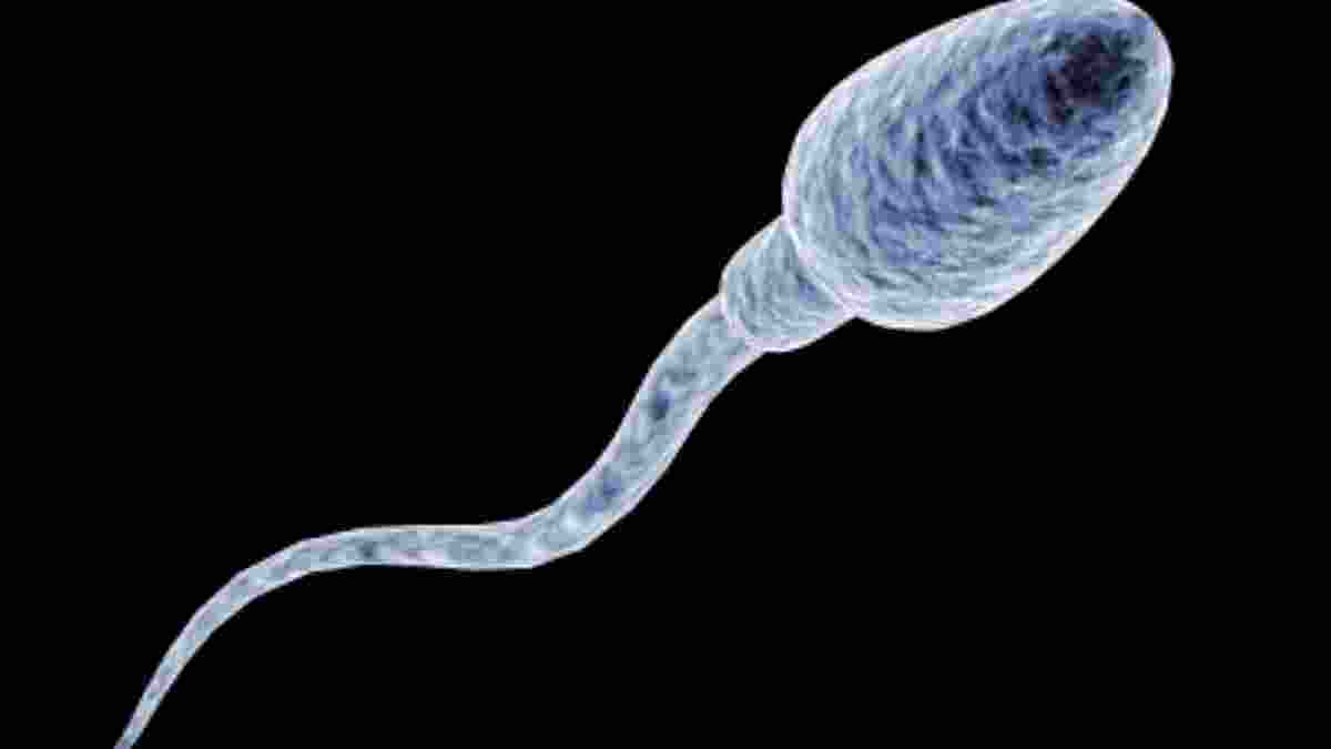 Muestra de semen, espermograma