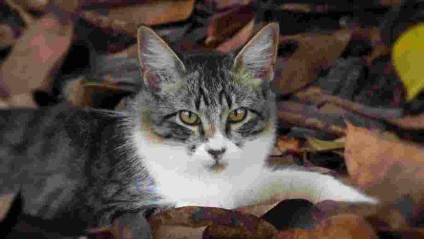 Coronavirus en gatos