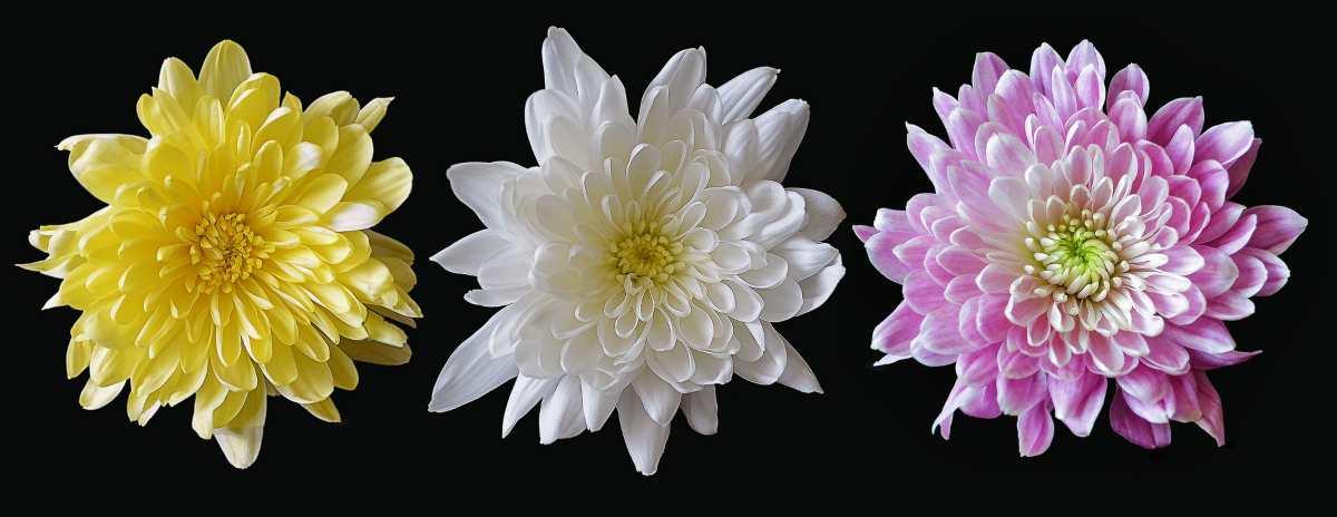 Beneficios saludables de las flores de verano