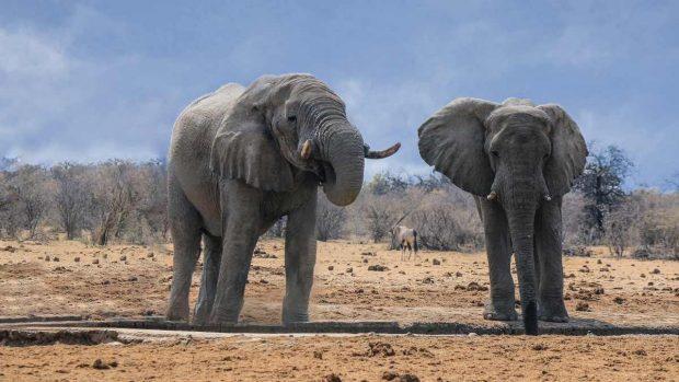 Orígenes elefante